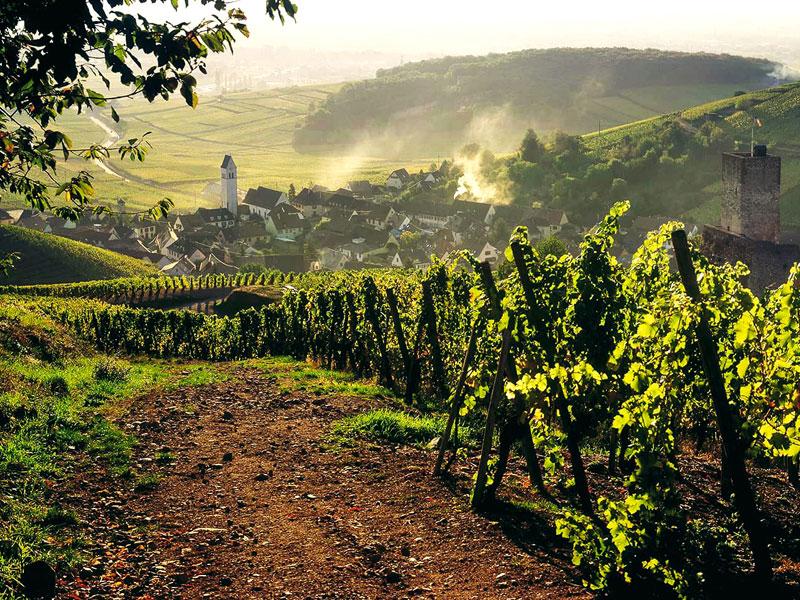 Wine Connexion - Alsace - vignoble
