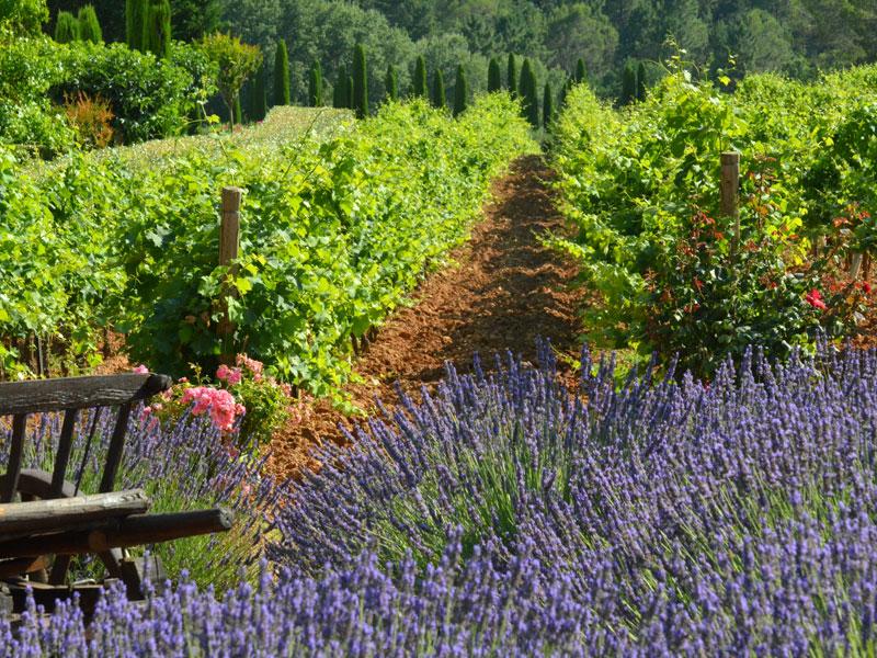 Wine Connexion - Côtes De Provence