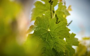 Wine Connexion - Cave à vin - Fûts de chêne
