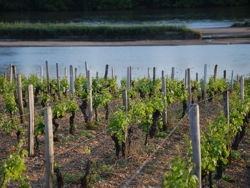 Wine Connexion - Vallée de La Loire