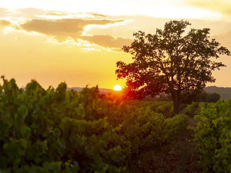 Wine Connexion - Vallée Du Rhône