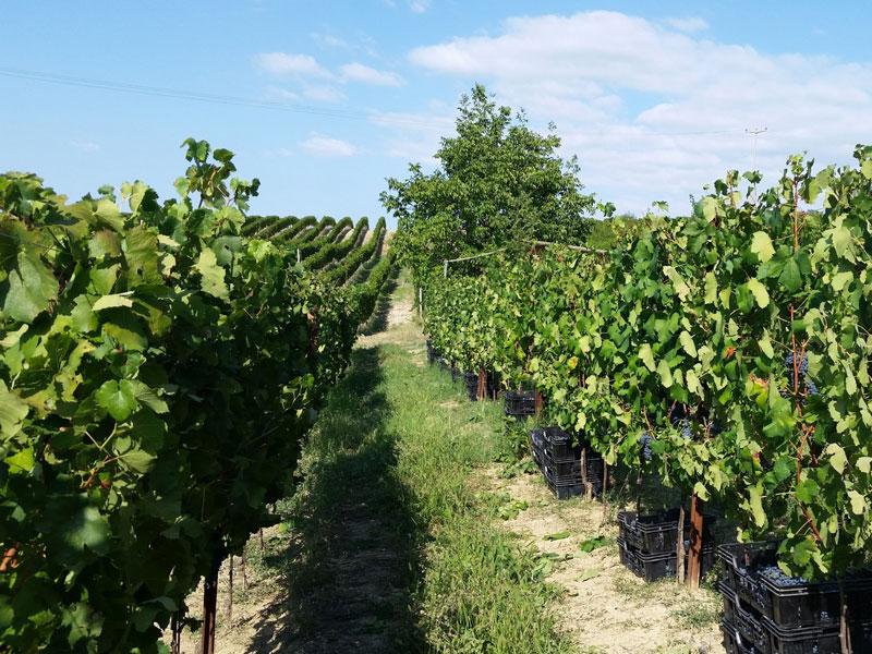 wine-connexion - vignoble Italie