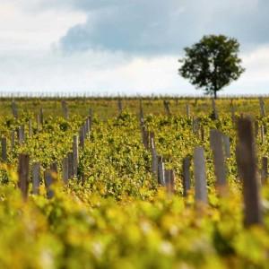 Wine Connexion - Vins de Bordeaux