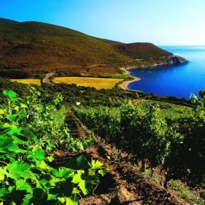 Wine Connexion - Vignobles de Corse
