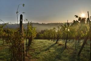 Wine Connexion - Nice - Vins et spiritueux
