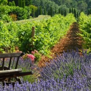 Wine Connexion - Provence, Alpes, Côtes d'Azur et Corse