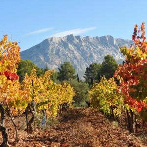 Wine Connexion - Vignoble Aix en Provence