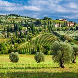 Wine Connexion - Vins italiens